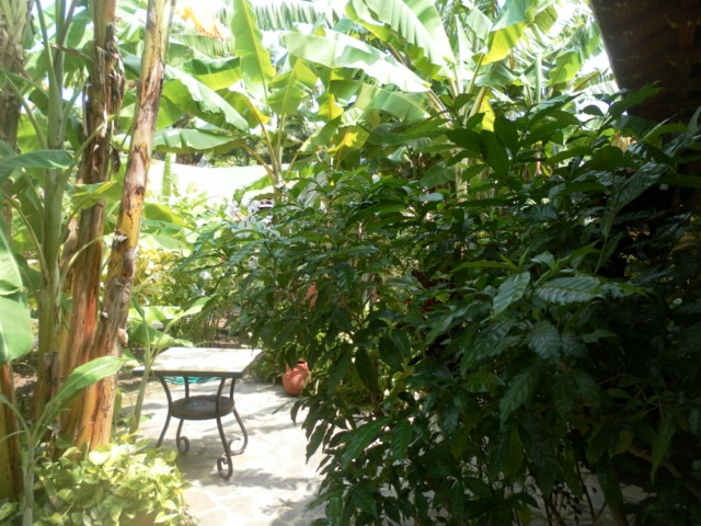 Casa Tranquilla - Mini Garden